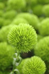 Greentruffe_up
