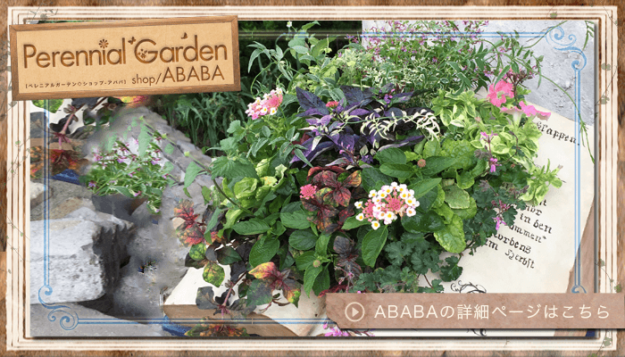 Perennial Garden shop ABABA