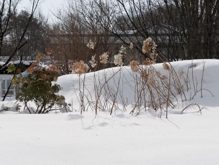 雪のガーデン
