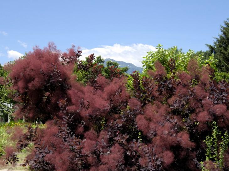 ロイヤルパープルから駒ヶ岳を望む